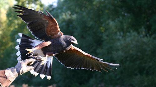 Greifvogelpark Buchs