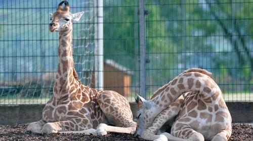 Zoos & Tierparks