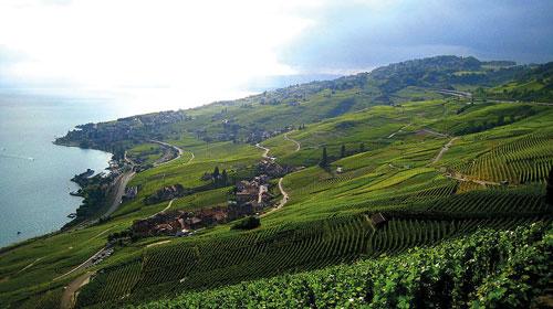 Genusswanderung durch die Weinterassen von Lavaux