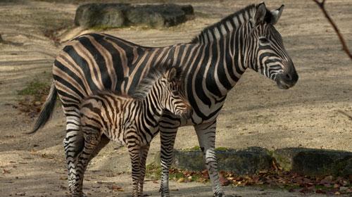 Zoo Zürich / Karsten Blum
